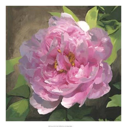 Framed Peony In Pink I Print