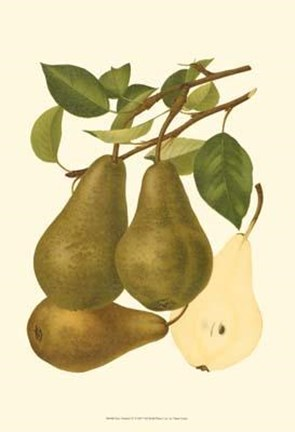 Framed Pear Varieties IV Print