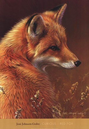 Framed Curious Red Fox Print