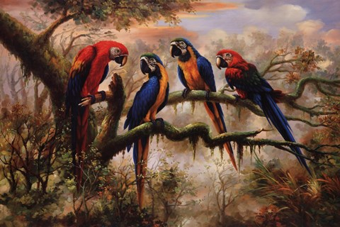 Framed Macaw Morning Print