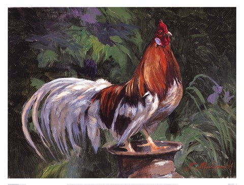 Framed Red And White Rooster Print