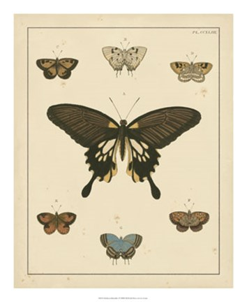 Framed Heirloom Butterflies I Print