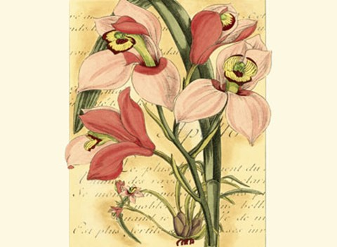 Framed French Orchid Print