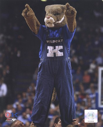 university of kentucky wildcats mascot fine art print by unknown at