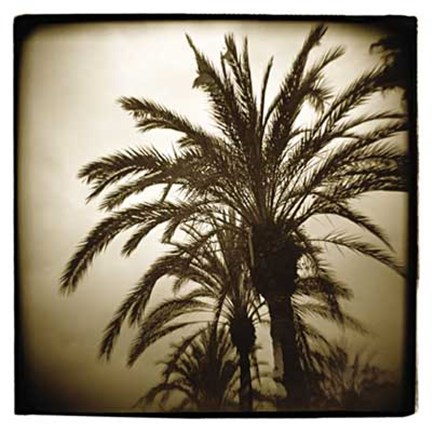 Framed Palm Study II Print