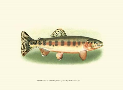 Framed River Trout II Print