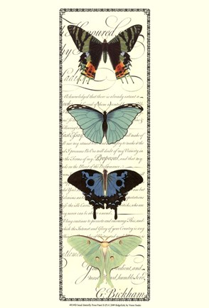 Framed Small Butterfly Prose Panel II Print