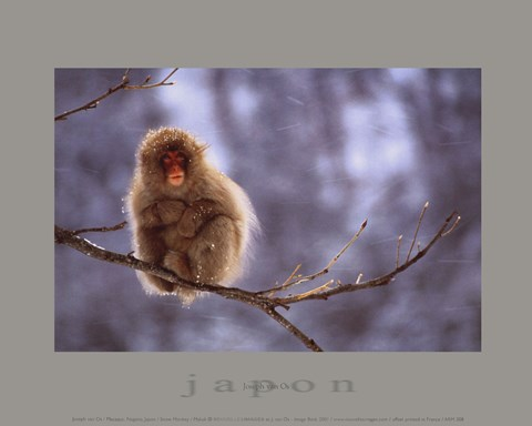 Framed Snow Monkey Print
