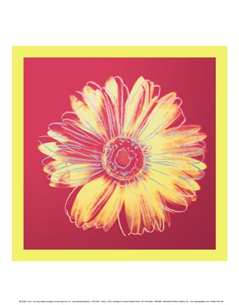 Framed Daisy, c.1982 (fuchsia & yellow) Print