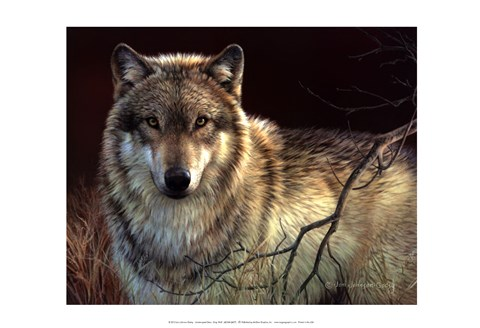 Framed Uninterrupted Stare- Gray Wolf Print