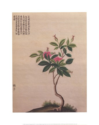 Framed Flowering Chinese Tree I Print