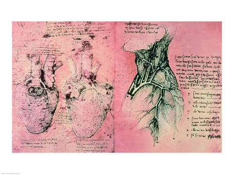Framed Anatomical drawing of hearts and blood vessels Print