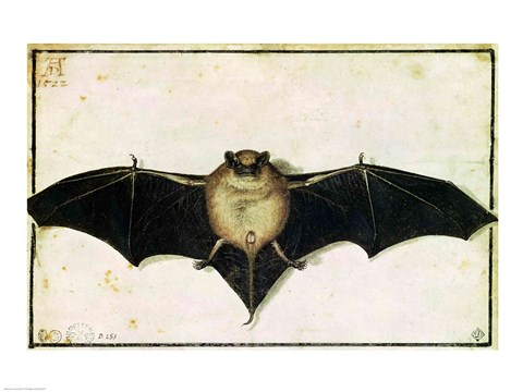 Framed Bat, 1522 Print