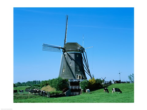 Framed Windmill and Cows, Wilsveen, Netherlands Photograph Print