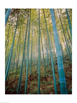Framed Bamboo Forest, Sagano, Japan Print
