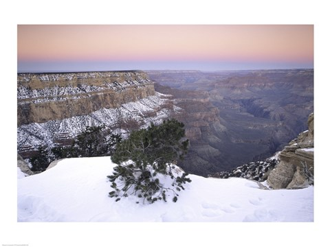 Framed High angle view of a tree on a snow covered mountain, South Rim, Grand Canyon National Park, Arizona, USA Print