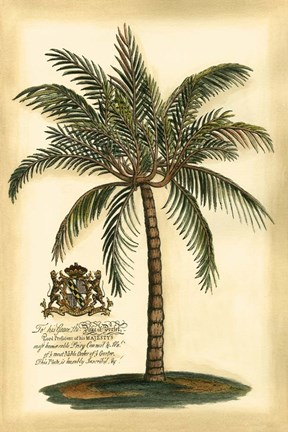 Framed British Colonial Palm III Print