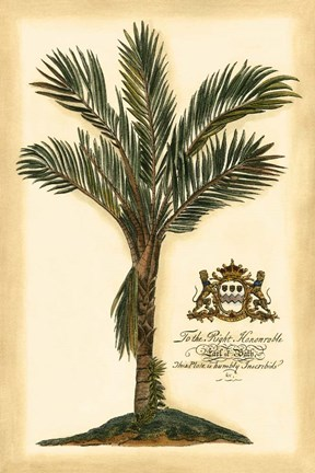 Framed British Colonial Palm IV Print