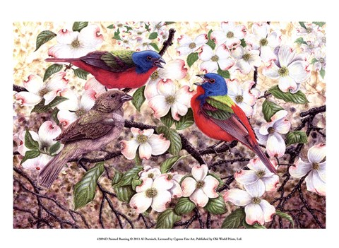 Framed Painted Bunting Print