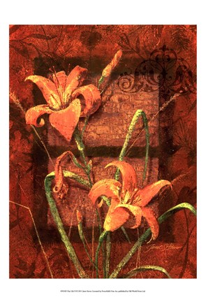 Framed Day Lily II Print