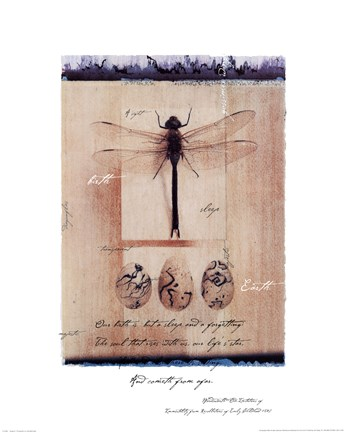 Framed Dragon Fly Print