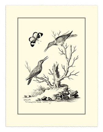 Framed B&W The Hummingbirds (1742) Print