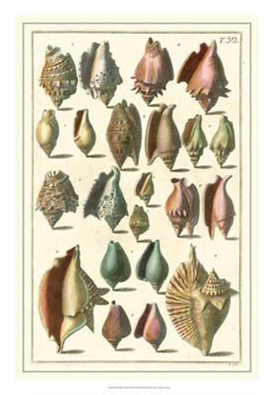 Framed Shell Collection III Print