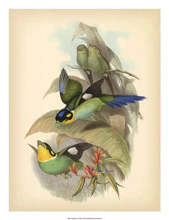 Framed Birds of the Tropics I Print