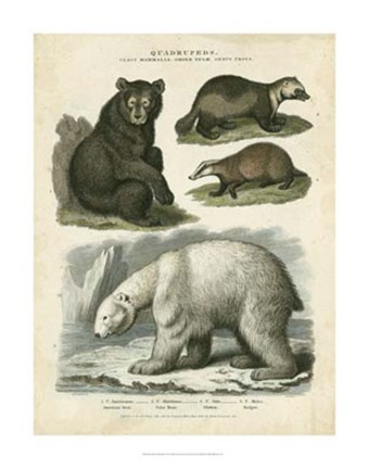Framed Brown Bear & Polar Bear Print