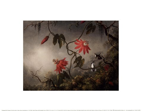 Framed Passion Flowers and Hummingbirds, about 1870-83 Print