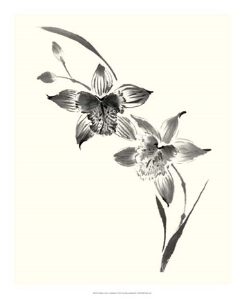 Framed Studies in Ink - Cymbidium Print