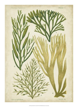 Framed Seaweed Specimen in Green III Print