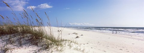 Framed Tall grass on the beach, Perdido Key Area, Gulf Islands National Seashore, Pensacola, Florida, USA Print