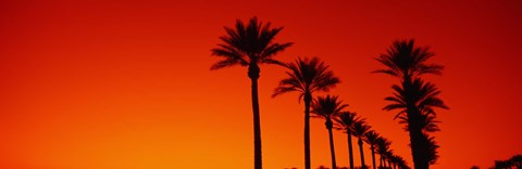 Framed Silhouette of Date Palm trees in a row at dawn, Phoenix, Arizona, USA Print