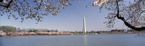 Framed Cherry blossom with monument in the background, Washington Monument, Tidal Basin, Washington DC, USA Print