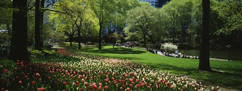 Framed Flowers in a park, Central Park, Manhattan, New York City, New York State, USA Print