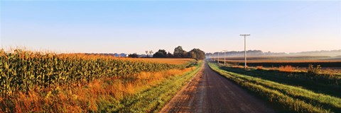 Framed Road Along Rural Cornfield, Illinois, USA Print
