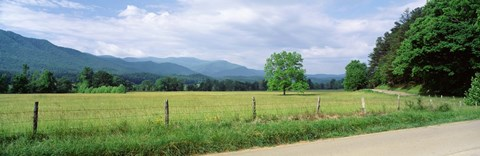 Framed Road Along A Grass Field, Cades Cove, Great Smoky Mountains National Park, Tennessee, USA Print