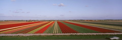 Framed High Angle View Of Cultivated Flowers On A Field, Holland Print