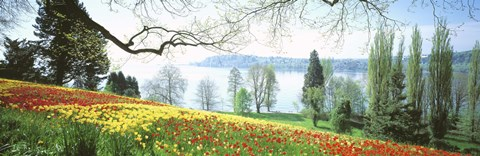 Framed Lake Constance, Insel Mainau, Germany Print