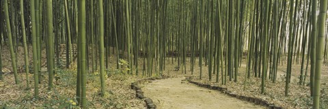 Framed Bamboo trees on both sides of a path, Kyoto, Japan Print