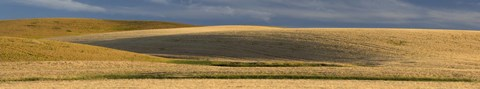 Framed Wheat field, Palouse, Washington State, USA Print