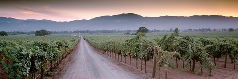 Framed Road in a vineyard, Napa Valley, California, USA Print