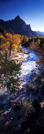 Framed High angle view of a river flowing through a forest, Virgin River, Zion National Park, Utah, USA Print