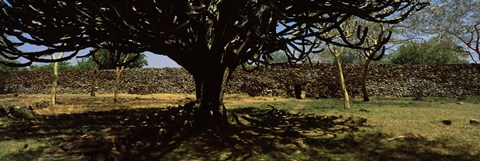 Framed Trees in a field with a stone wall in the background, Thimlich Ohinga, Lake Victoria, Great Rift Valley, Kenya Print