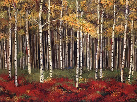 Framed Aspen Forest Print
