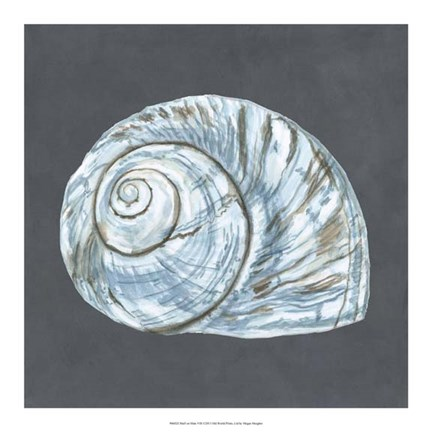 Framed Shell on Slate VIII Print
