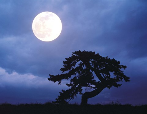 Framed Silhouetted tree with full moon in sky Print