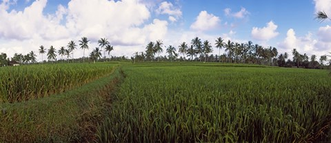 Rice field, Bali, Indonesia by Panoramic Images