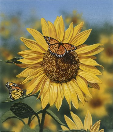 Sunflower Butterflies Fine Art Print By William